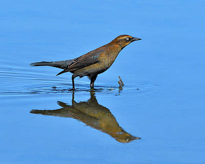 Rusty Reflection Print by Tony Beck