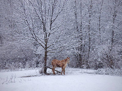 Horse Farm Maryland Photograph - Rusty by Robert Geary