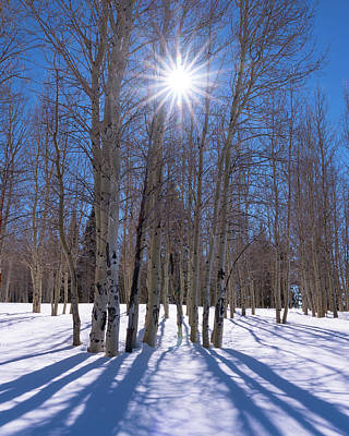 Coconino National Forest Photograph - Sunlit Aspens by Mikes Nature