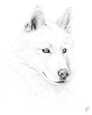 Saber A Siberian Husky Print by Stacey May