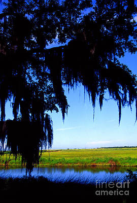 Acadian Photograph - Sabine National Wildlife Refuge Along The Creole Nature Trail by Thomas R Fletcher
