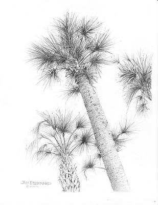 Cabbage Drawing - Sable Cabbage Palm by Jim Hubbard