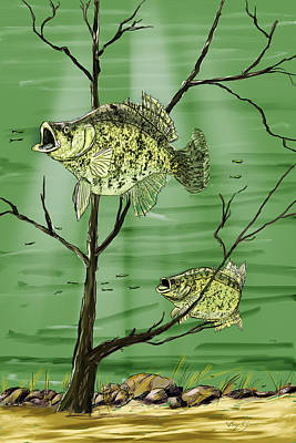 Bass Fishing Drawing - Sac-a-lait Haven by Barry Jones