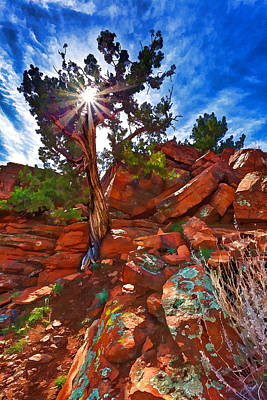 Digitally Manipulated Photograph - Shaman's Dome Juniper by ABeautifulSky Photography