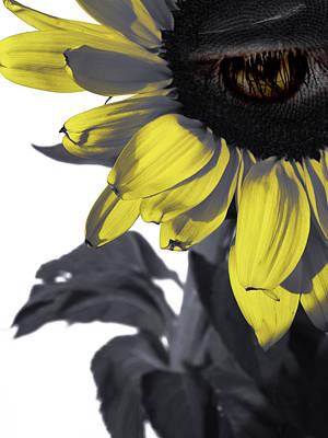 Sad Digital Art - Sad Sunflower by Kelly Jade King
