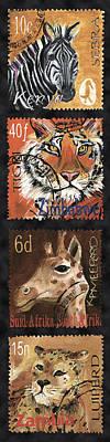 Safari Series Print by Debbie McCulley