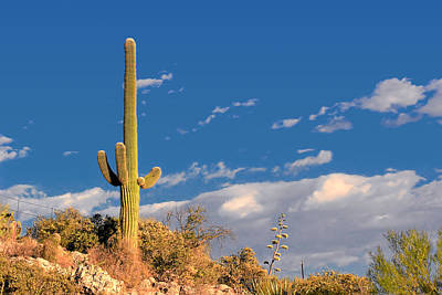 Blue Skies Photograph - Saguaro Cactus - Symbol Of The American West by Christine Till