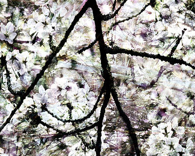 Sakura Print by Ken Walker