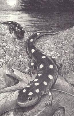 Salamanders Drawing - Salamander by Jennifer Harper