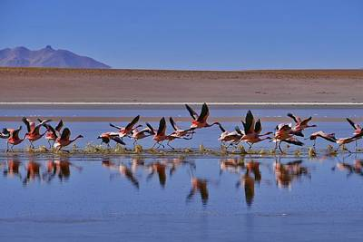 Salar De Uyuni Tour 24 Print by Skip Hunt