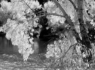 Salmon River Photograph - Salmon River Autumn by Leland D Howard
