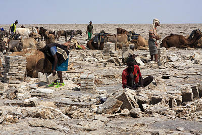 Camel Photograph - Salt Miners, Ethiopia by Aidan Moran