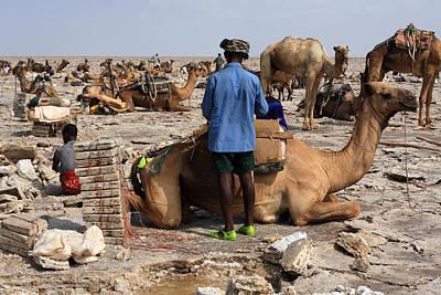 Camel Photograph - Salt Miners Of The Danakil by Aidan Moran