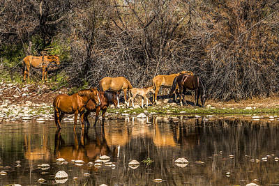 Horse Photograph - Salt River Wild Horses by Chuck Brown