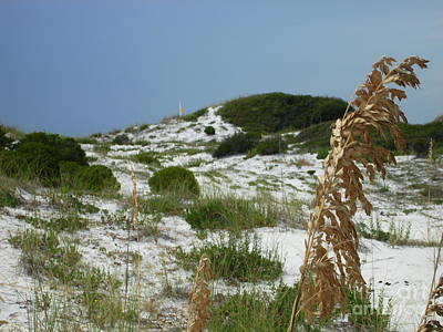 Sand Dunes Of Pcb Print by Anthony Allen