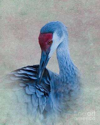 Crane Digital Art - Sandhill Crane by Betty LaRue