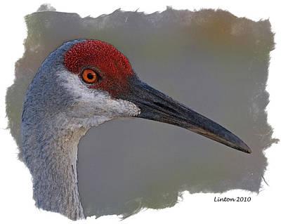 Crane Digital Art - Sandhill Crane Portrait by Larry Linton