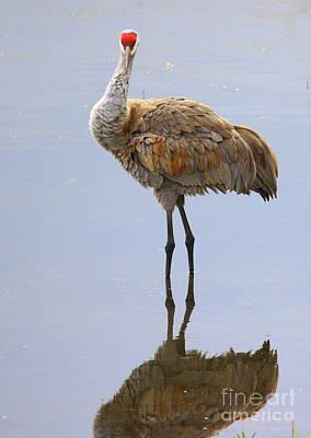 Of Birds Photograph - Sandhill Crane Posing by Carol Groenen