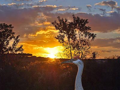 Sandhill Sundown Original by Adele Moscaritolo