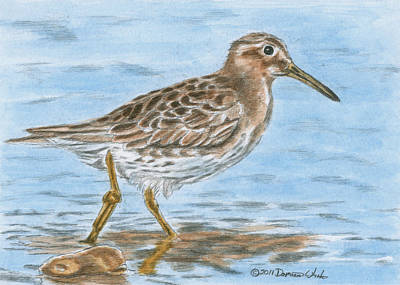 Sandpiper Painting - Sandpiper by Dominic White