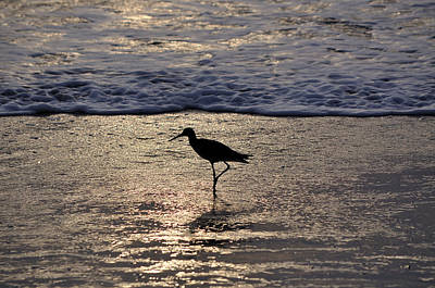 Sandpiper On A Golden Beach Original by Kenneth Albin