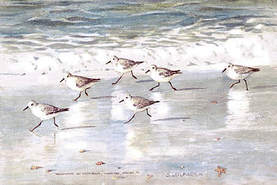 Keys Painting - Sandpipers On Siesta Key by Shawn McLoughlin