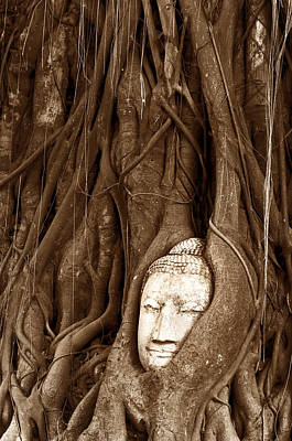 Sandstone Buddha Head Overgrown By Banyan Tree Thailand Original by Tanawat Pontchour