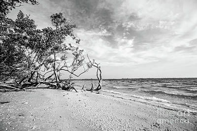 Photograph - Sanibel Island Morning by Scott Pellegrin