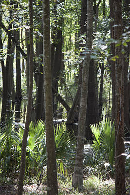 Cypress Swamp Photograph - Santee State Park Swamp View by Suzanne Gaff