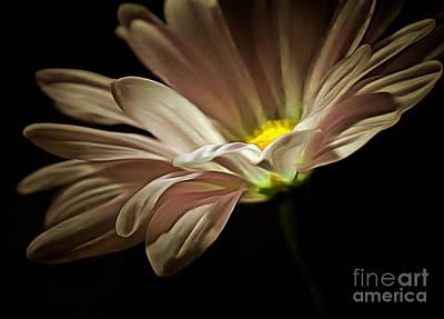 White Daisy Photograph - Saving Grace by Krissy Katsimbras
