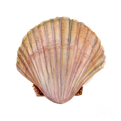 Beige Painting - Scallop Shell by Amy Kirkpatrick