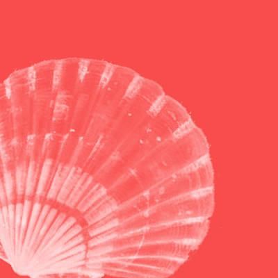 Coastal Decor Digital Art - Scallop Shell by Bonnie Bruno