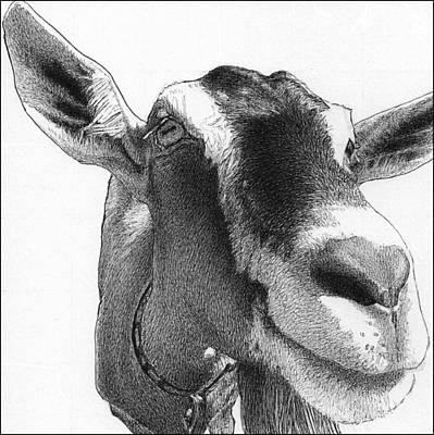 Fairer Sex Drawing - Scarlet Begonia by Lorraine Zaloom