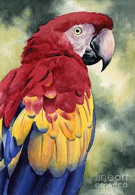 Scarlet Macaw Print by David Rogers