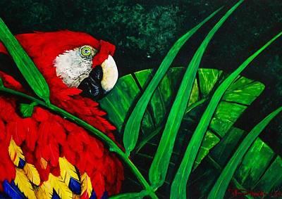 Macaw Drawing - Scarlet Macaw Head Study by Dana Newman