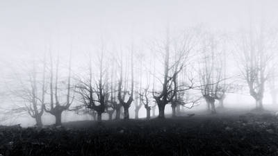 Scary Forest Print by Mikel Martinez de Osaba
