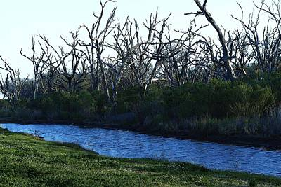 Eye4life Photograph - Scary Trees by Alicia Morales