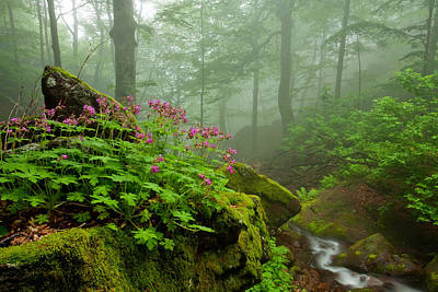 Bulgaria Photograph - Scent Of Spring by Evgeni Dinev