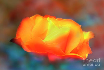 Photograph - Scents Of A Rose by Janie Johnson