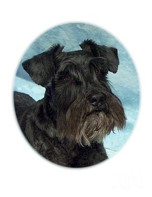 Schnauzer Art Digital Art - Schnauzer 149 by Larry Matthews