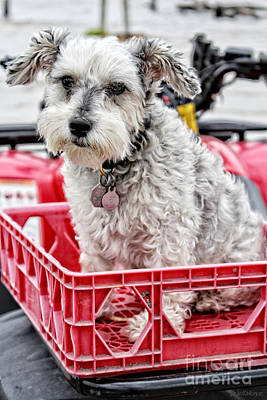 Pup Digital Art - Schnauzer Puppy Mania - I Got A Ticket To Ride by Ella Kaye Dickey