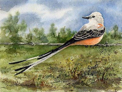 Flycatcher Painting - Scissor-tail Flycatcher by Sam Sidders