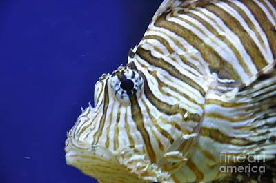 Photograph - Scorpionfish II by Frank Williams