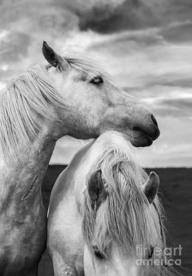 Wild Horse Photograph - Scottish Horses by Diane Diederich