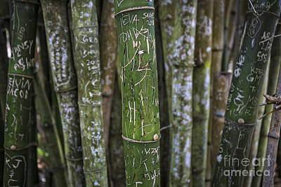 Scratched Bamboo Print by Edward Fielding