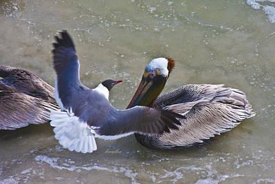 Seagull Photograph - Sea Breeze by Betsy Knapp