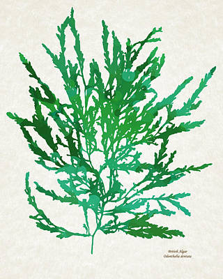 Alga Mixed Media - Sea Green Seaweed Art Odonthalia Dentata by Christina Rollo