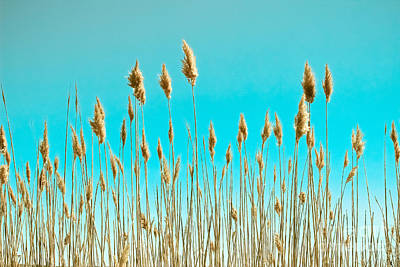 Sea Oats On Turquoise Sky Print by Colleen Kammerer