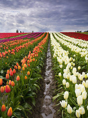Skagit Photograph - Sea Of Color by Mike  Dawson