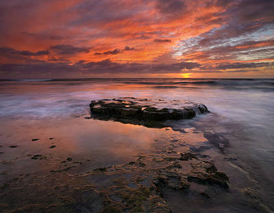 Sea Of Red Print by Mike  Dawson